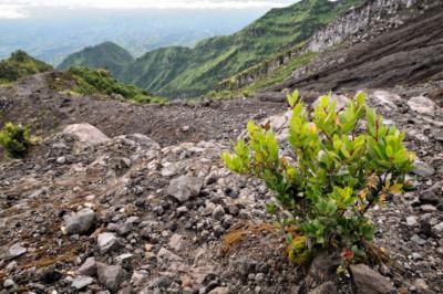 Végétation sur le flanc du volcan Merapi, Indonésie