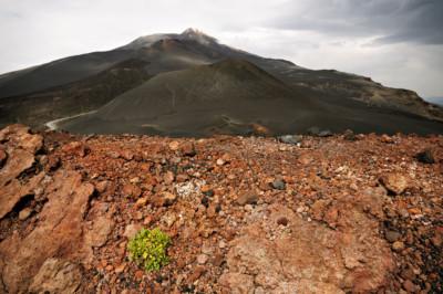 Plante isolée sur le Mont Etna en Sicile, Italie