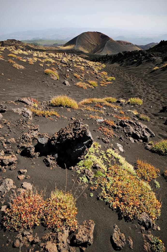 Végétation et ancien cratère sur le Mont Etna en Sicile