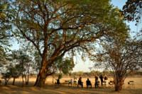 Chaises dans un campement de la vallée de la Luangwa, Zambie