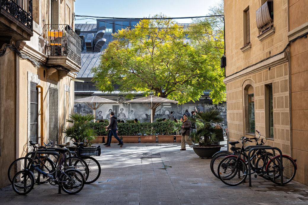 Arbre et vélos dans le quartier de la Barceloneta, Espagne