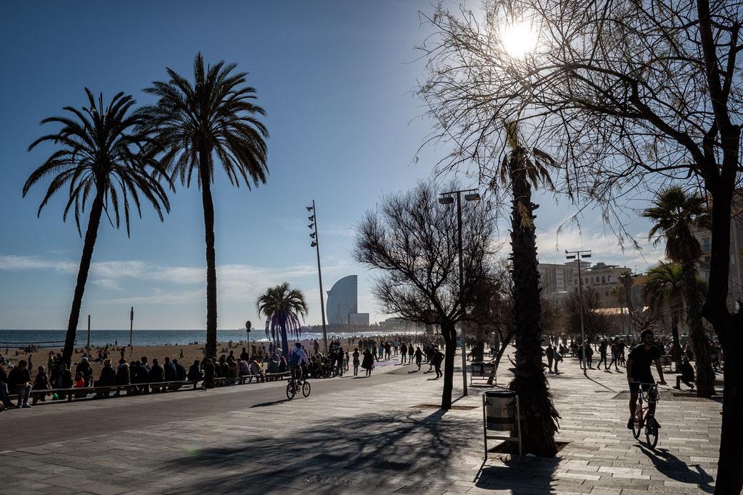 Soleil, plage et palmiers de la Barceloneta