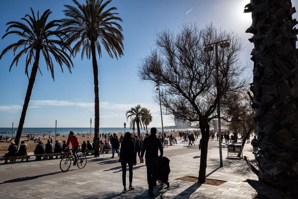 Palmiers et passants à la Barceloneta
