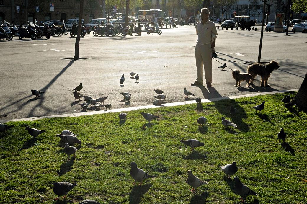 Homme qui promène ses chiens au milieu des pigeons, Espagne
