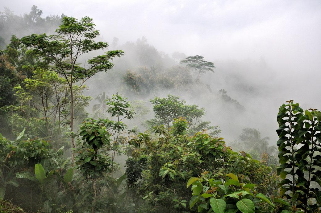 Brume sur la jungle près de Borobudur, Indonésie