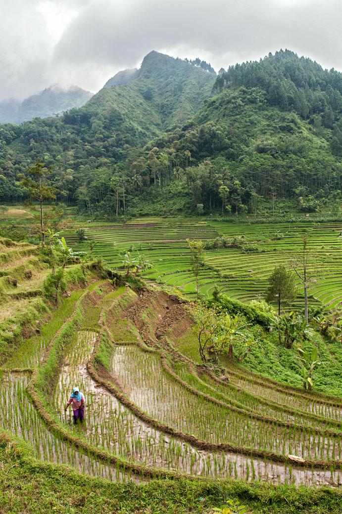 Rizières en terrasse et montagnes près de Magelang, Indonésie