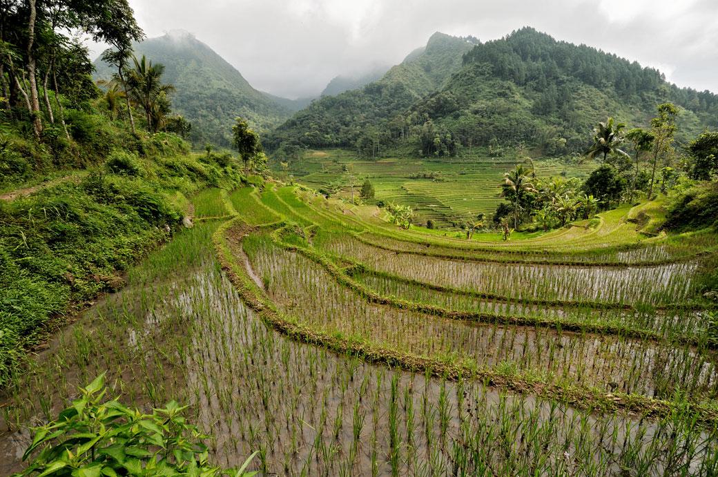 Rizières et montagnes de Java près de Magelang, Indonésie
