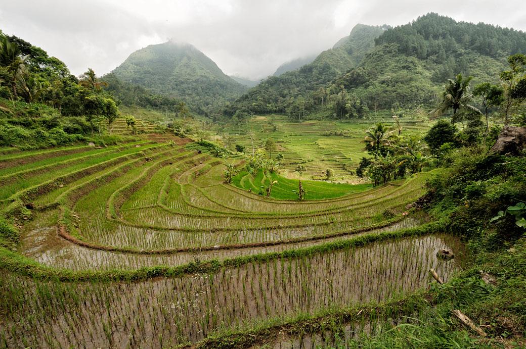 Rizières et montagnes javanaises près de Magelang, Indonésie