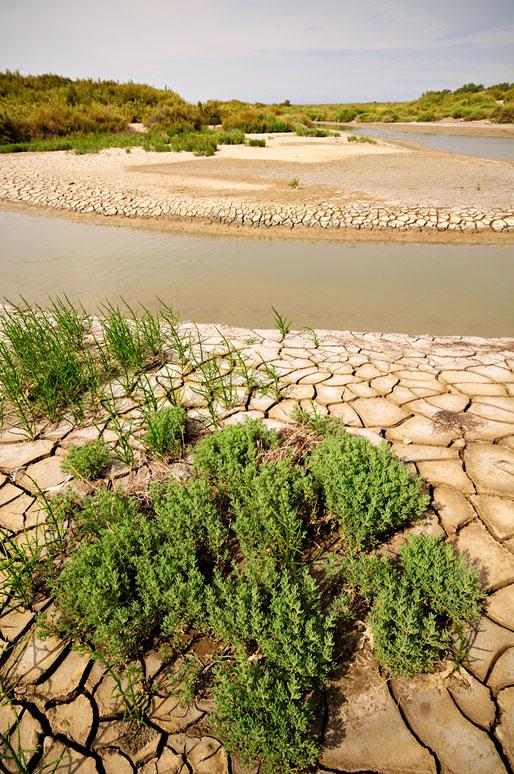 Terre desséchée et salicornes le long de la Digue à la Mer, France