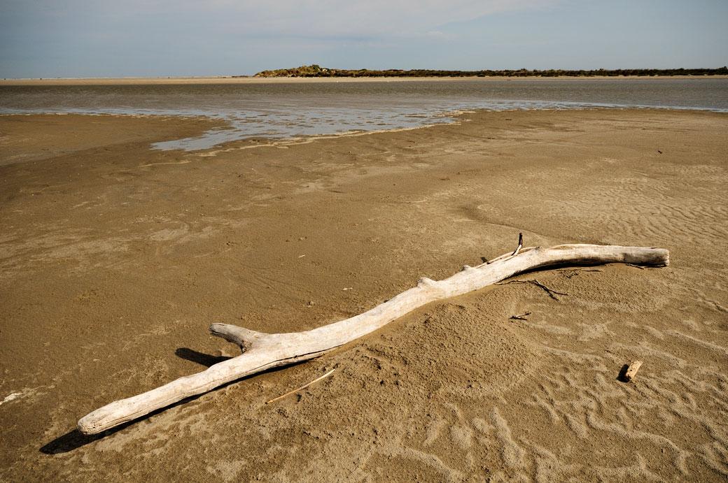 Branche morte sur une plage de Camargue, France