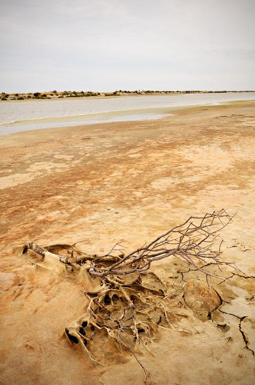 Branche morte et paysage austère de Camargue, France