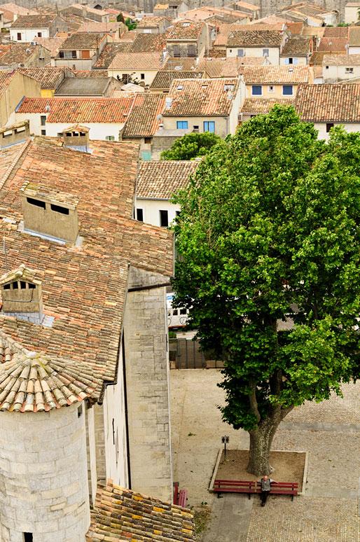 Arbre et toits de la ville d'Aigues-Mortes, France