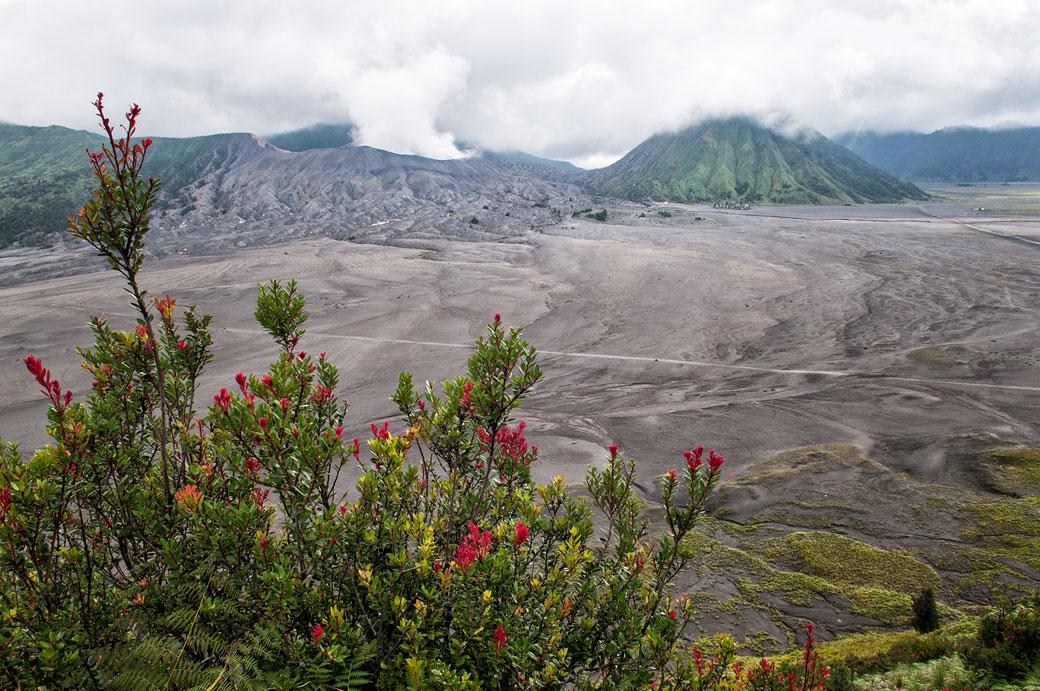 Volcans Bromo et Batok depuis Cemoro Lawang, Indonésie