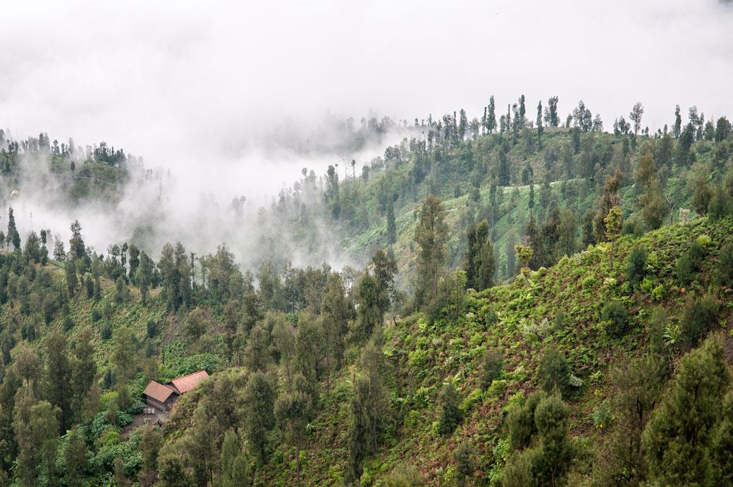 Arbres et brume sur l'île de Java, Indonésie