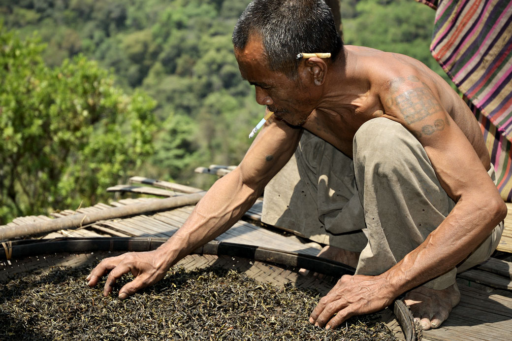Homme qui sèche le thé dans le village de Wun Nyat, Birmanie