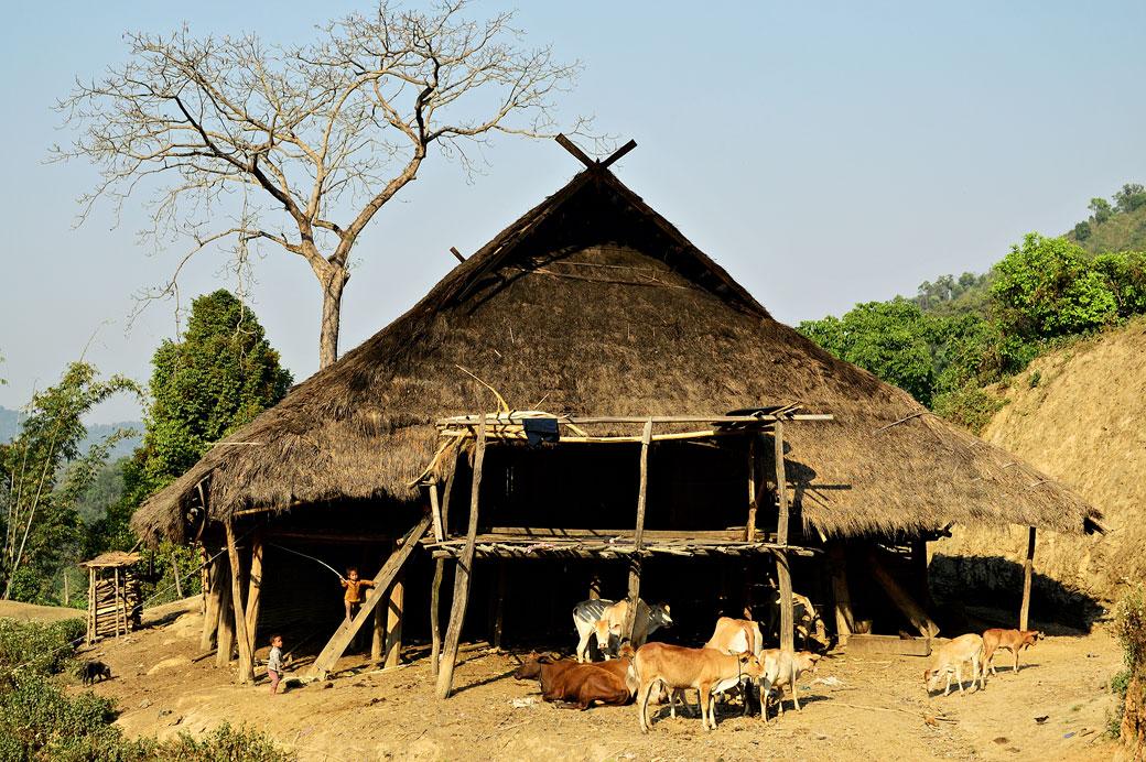 Bétail et maison de la tribu Loi au village de Wun Nyat
