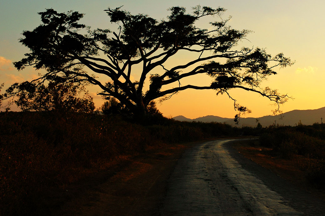 Arbre au bord de la route au coucher du soleil, Birmanie