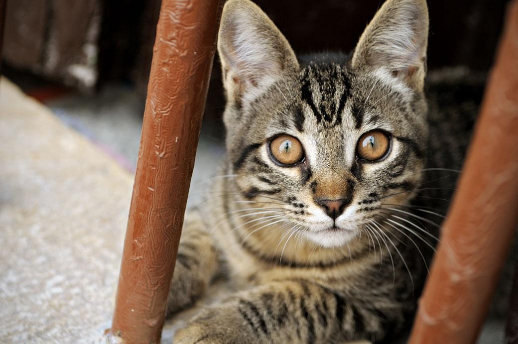 Un chat sur le bord d'une fenêtre à Rovinj en Istrie, Croatie