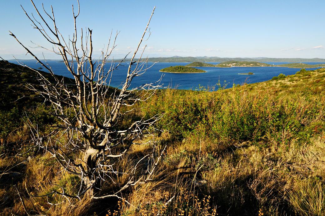 Arbre sans feuille sur Dugi Otok, Croatie