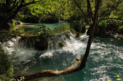 Rivière sauvage dans une forêt de Plitvice, Croatie