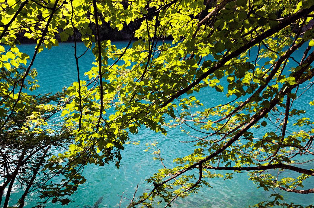Lac turquoise et forêt à Plitvice, Croatie