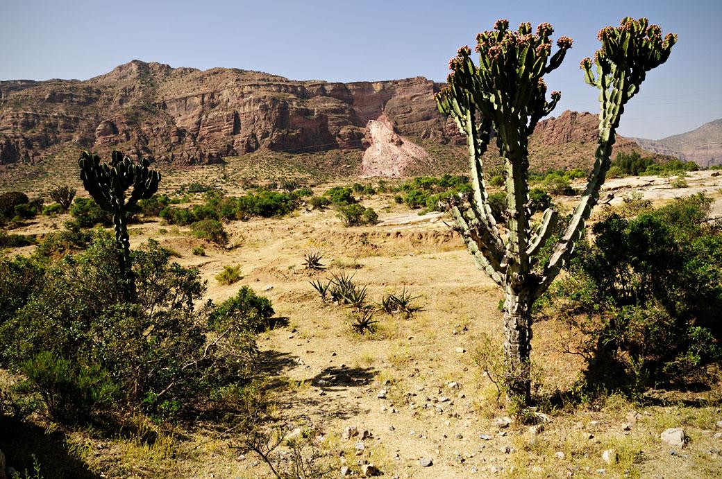 Paysage de montagnes et cactus du Tigray, Ethiopie