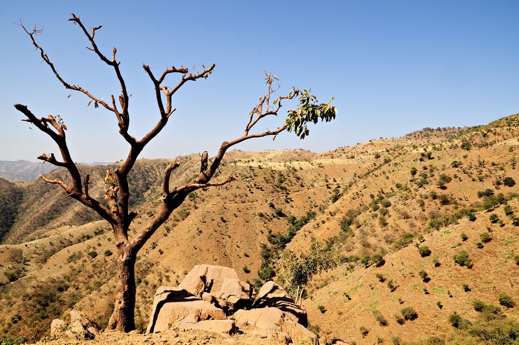 Arbre nu et paysage vallonné du nord de l'Ethiopie
