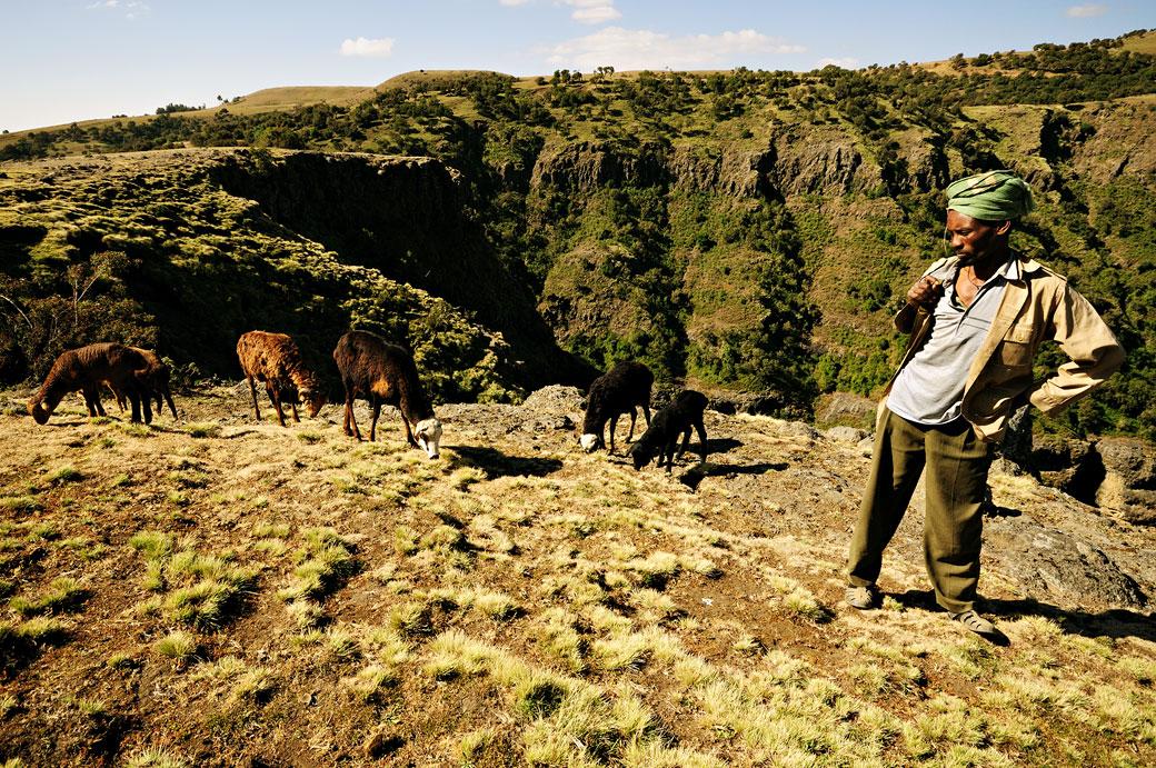 Ranger et moutons dans les montagnes du Simien, Ethiopie