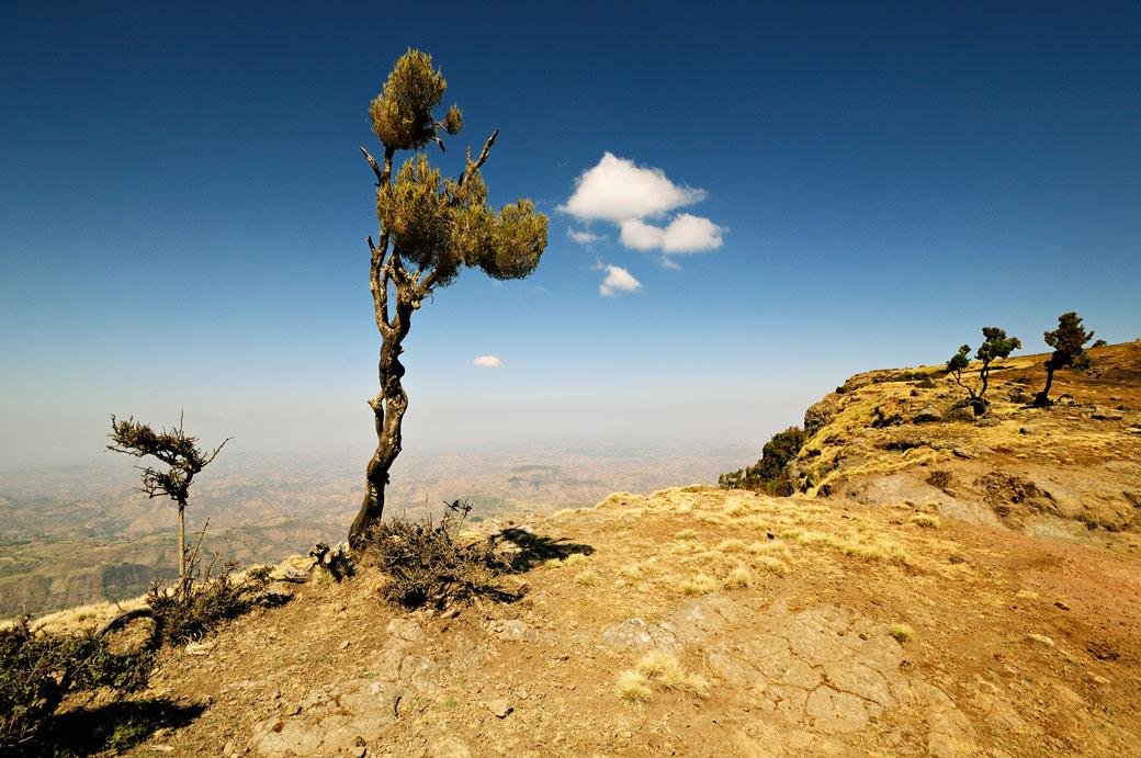 Arbre isolé dans les montagnes du Simien, Ethiopie
