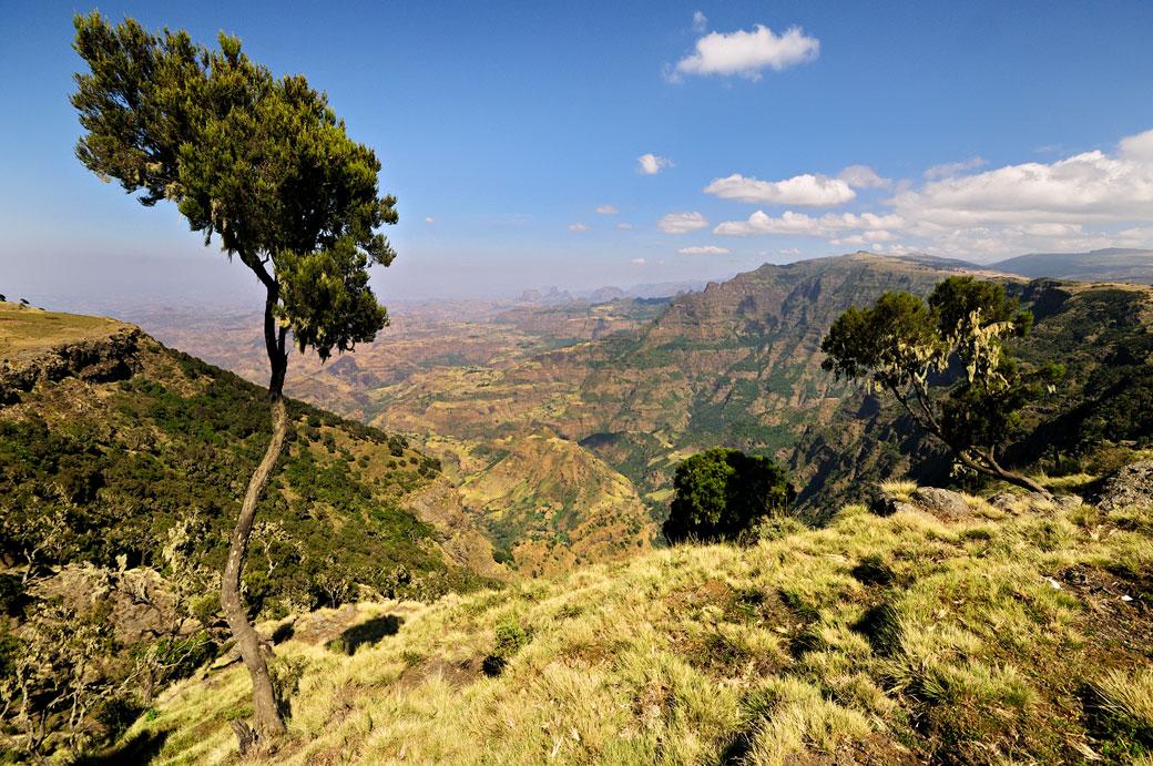 Arbre et grands espaces dans le massif du Simien, Ethiopie