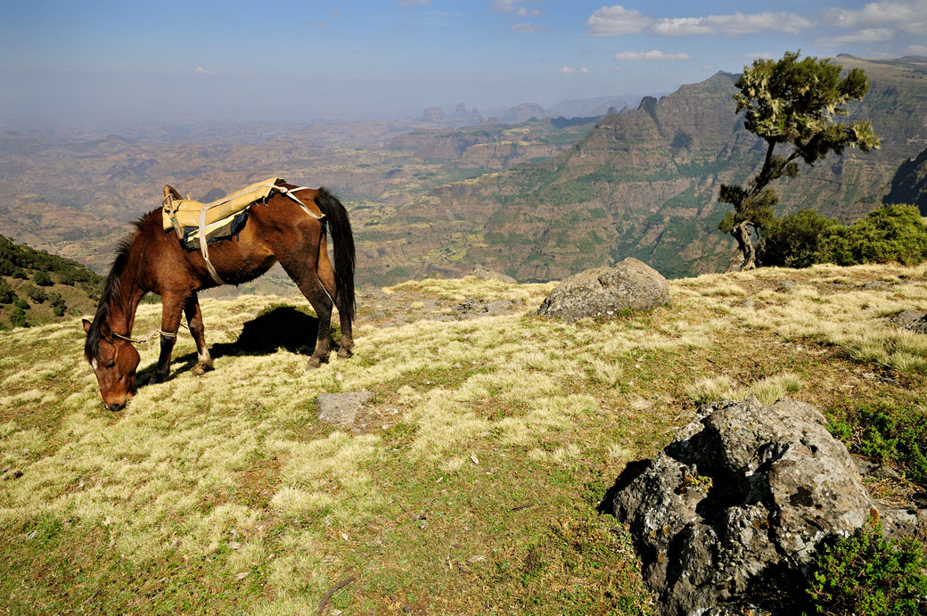 Cheval dans les montagnes du Simien, Ethiopie