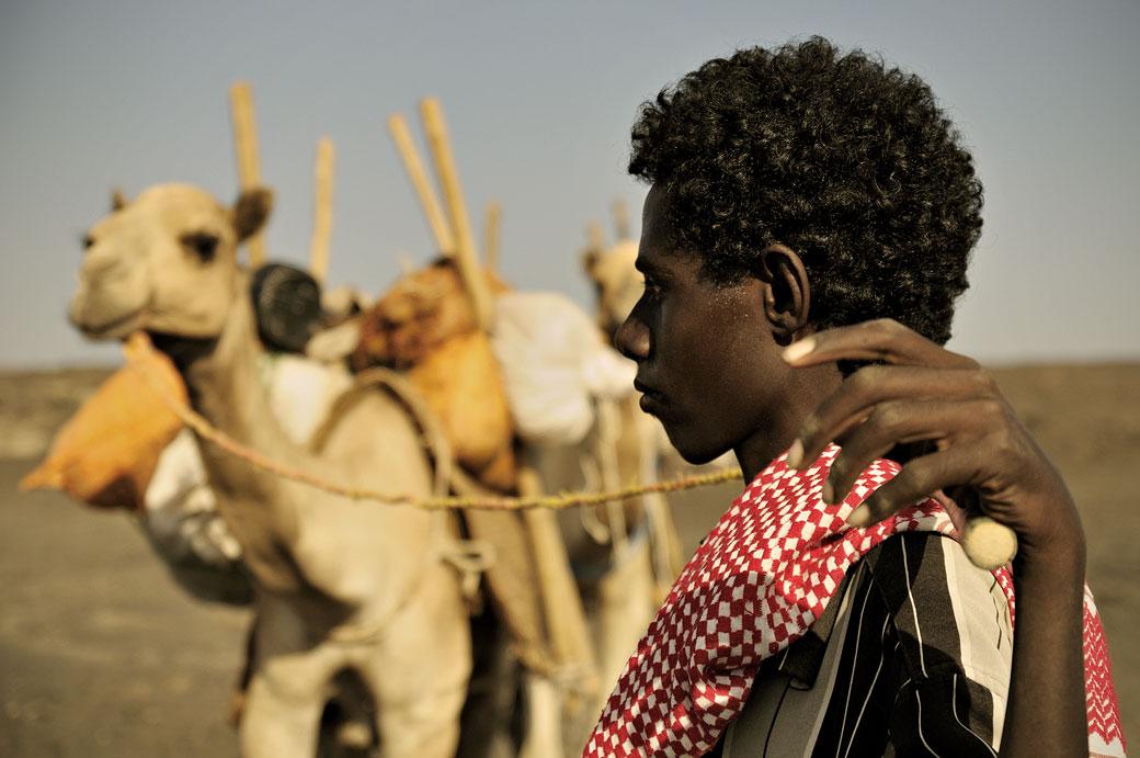 Nomade Afar avec ses dromadaires dans le désert du Danakil, Ethiopie