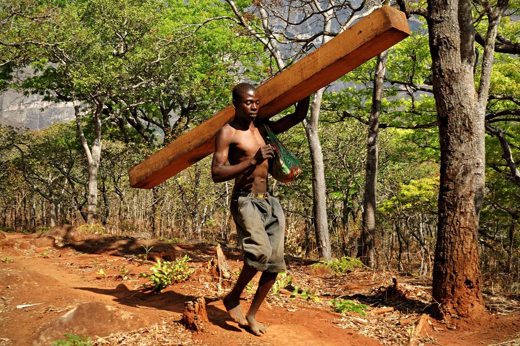 Homme qui transporte une poutre du Mulanje, Malawi