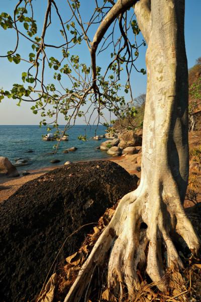 Ilala gap au bord du lac Malawi