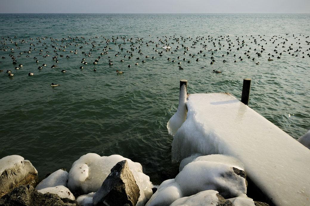 Ponton glacé et oiseaux au bord du lac Léman à Rolle, Suisse
