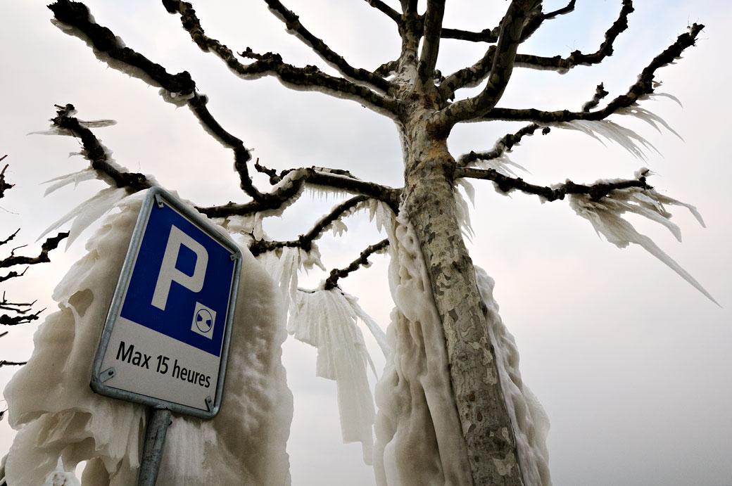 Panneau de parcage et arbre gelé à Versoix, Suisse