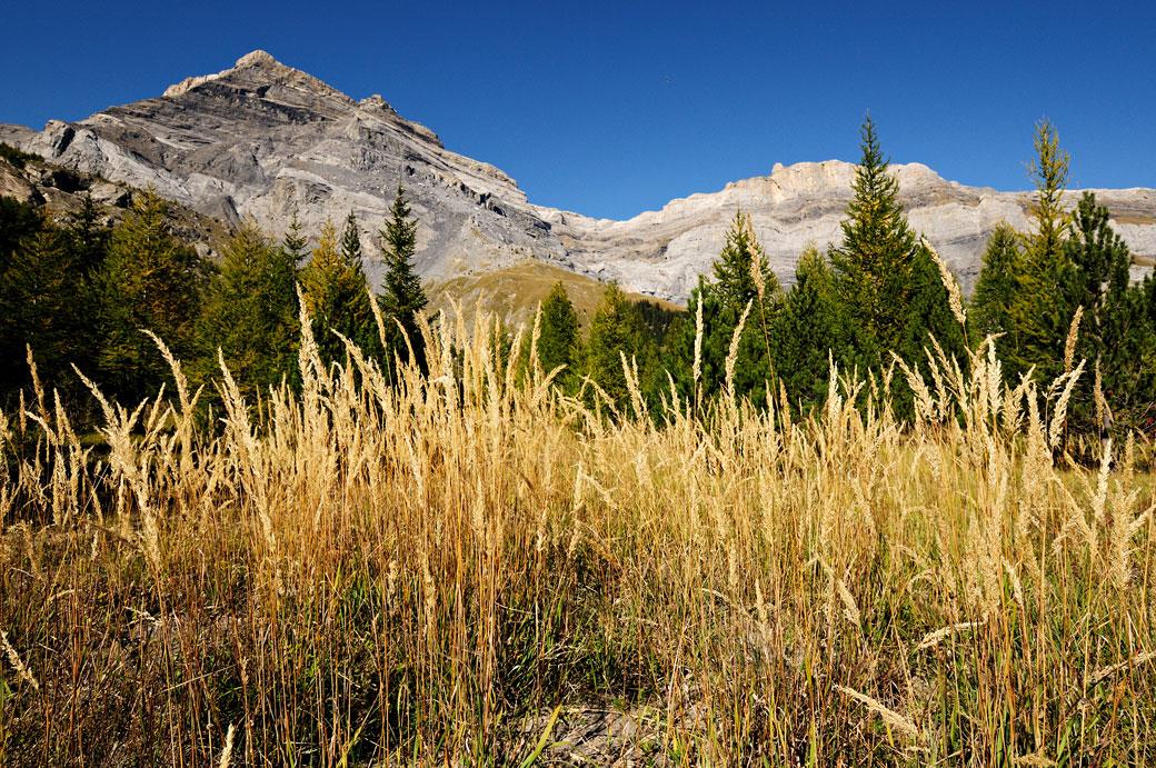 Herbes sèches à Derborence dans le canton du Valais, Suisse