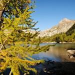 Suisse : La réserve naturelle de Derborence