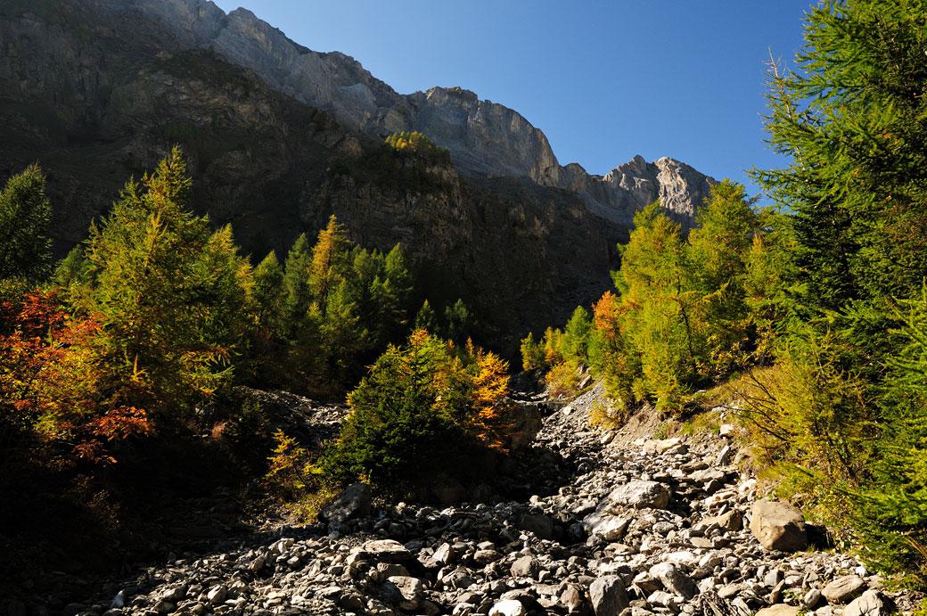 Mélèzes et montagnes dans le canton du Valais, Suisse
