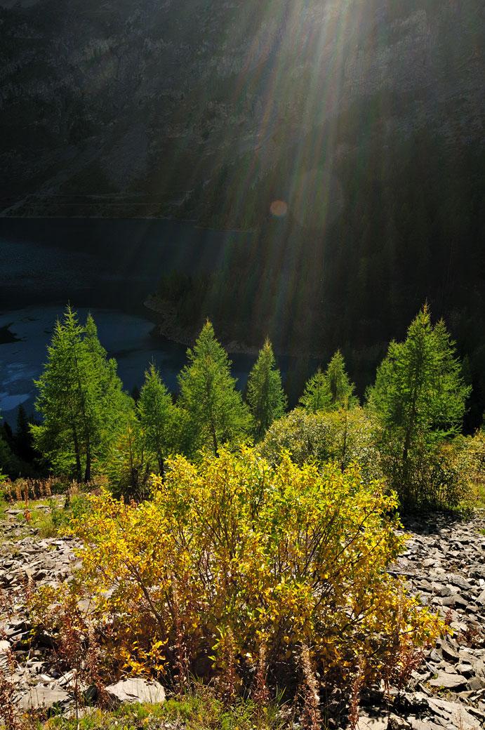 Rayons de soleil sur des mélèzes dans le canton du Valais, Suisse