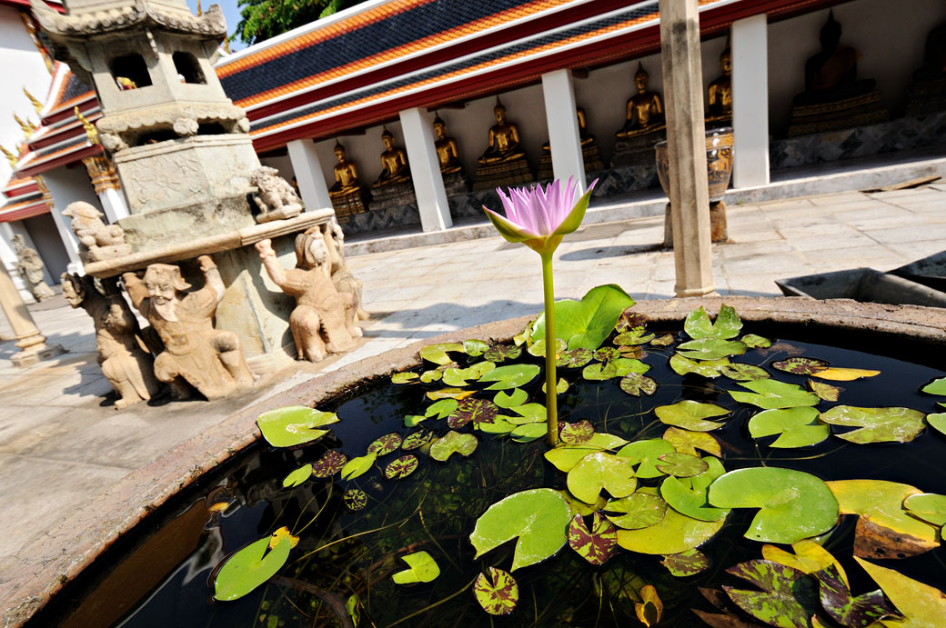 Bassin rempli de nénuphars au Wat Pho de Bangkok, Thaïlande