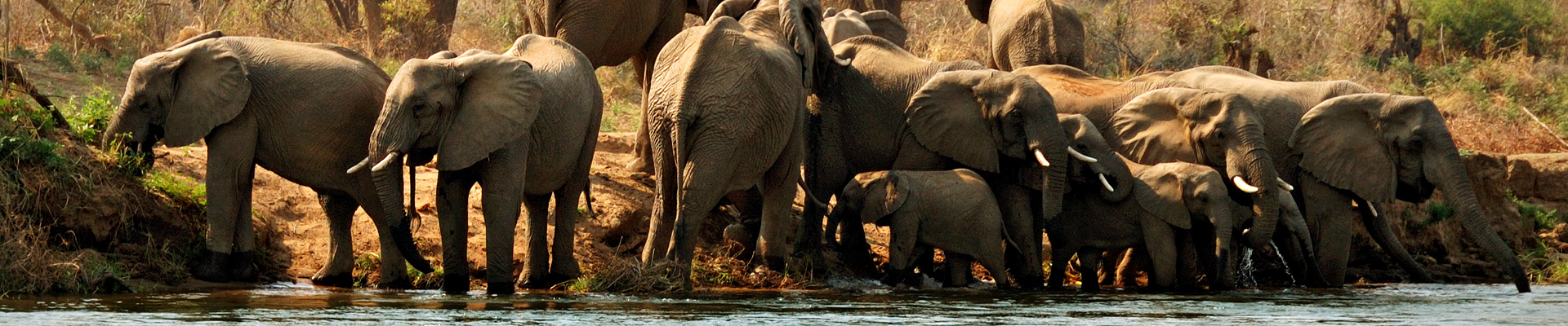 Top image groupe d'éléphants au bord du Zambèze, Zambie