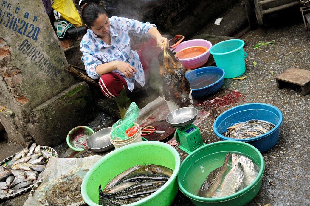 Femme qui ébouillante une poule au marché de Hanoi, Vietnam