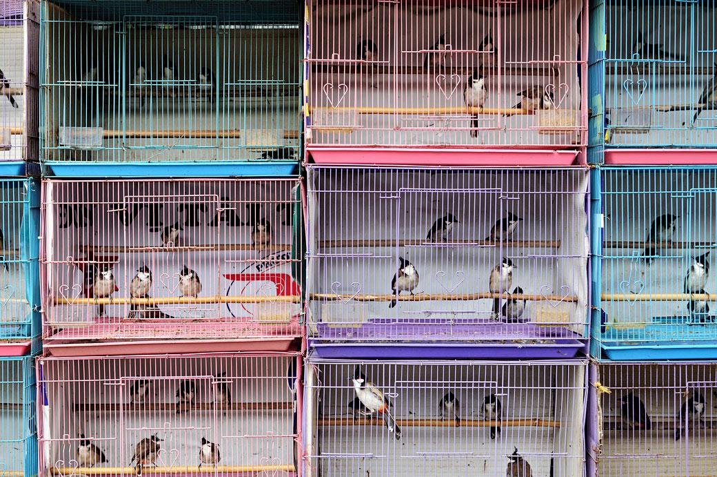 Oiseaux en cage à Hanoi, Vietnam