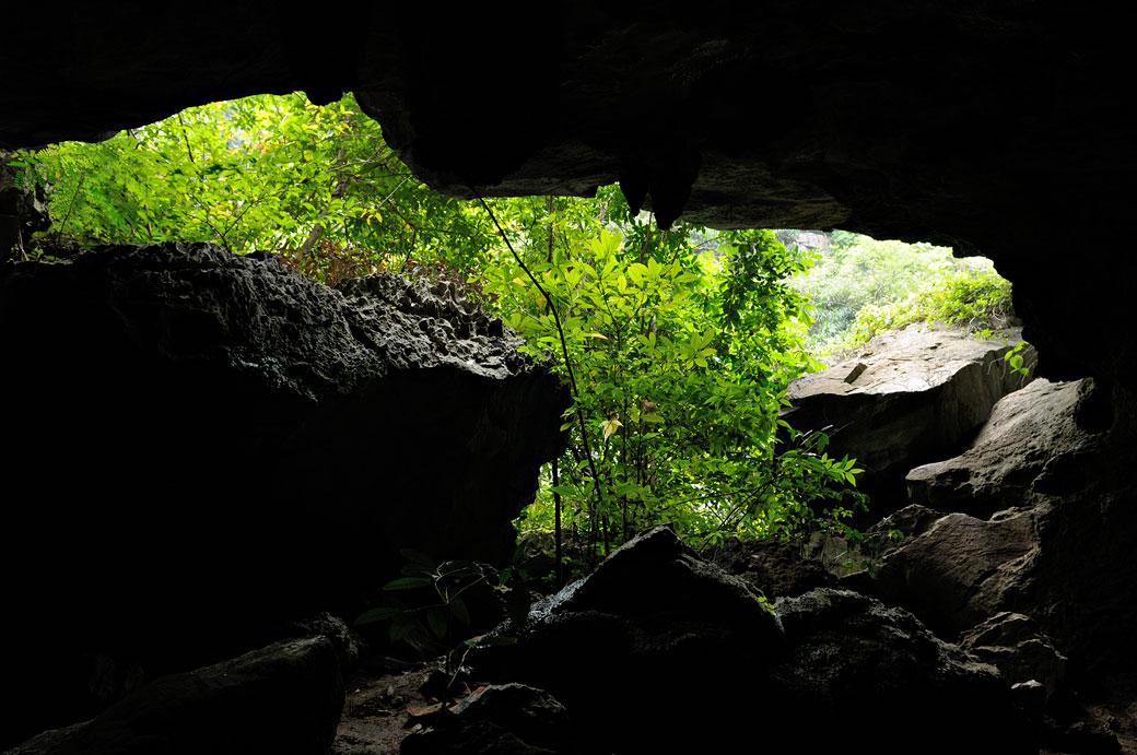 Grotte et végétation sur une île de la baie d'Halong, Vietnam