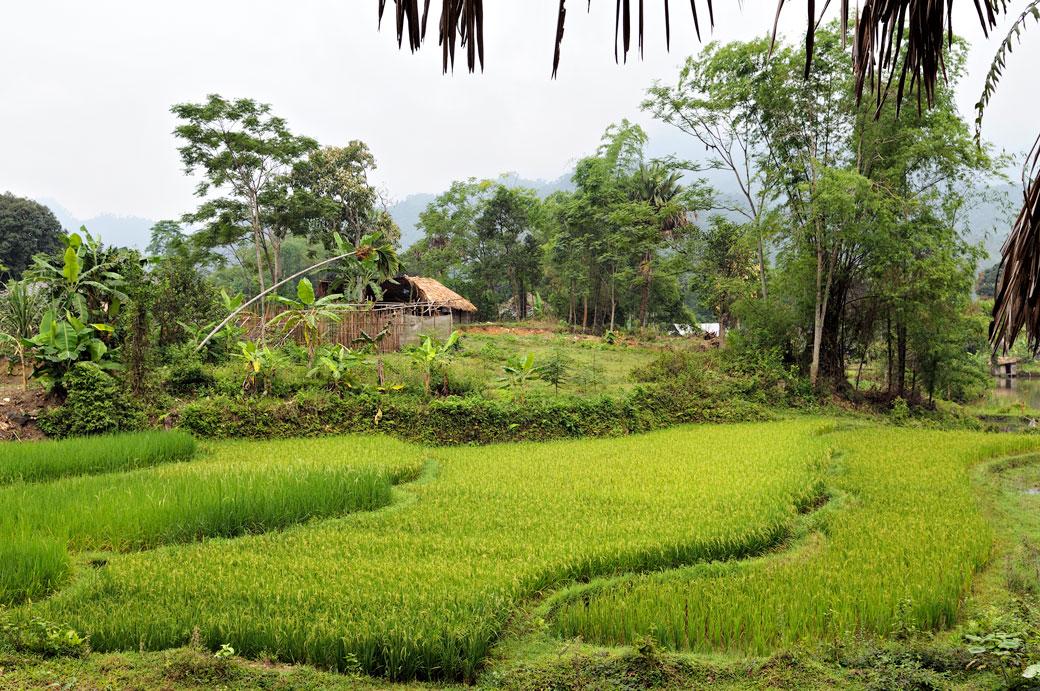 Rizières dans un village de la minorité Tay près de Hà Giang