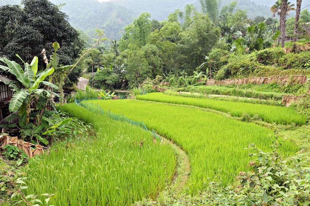 Rizières dans un village près de Hà Giang (minorité Tay)