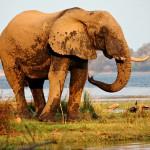 Zambie : Safari-photo en canoë sur le Zambèze
