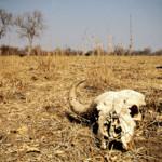 Zambie : Safari dans le parc national du Sud Luangwa