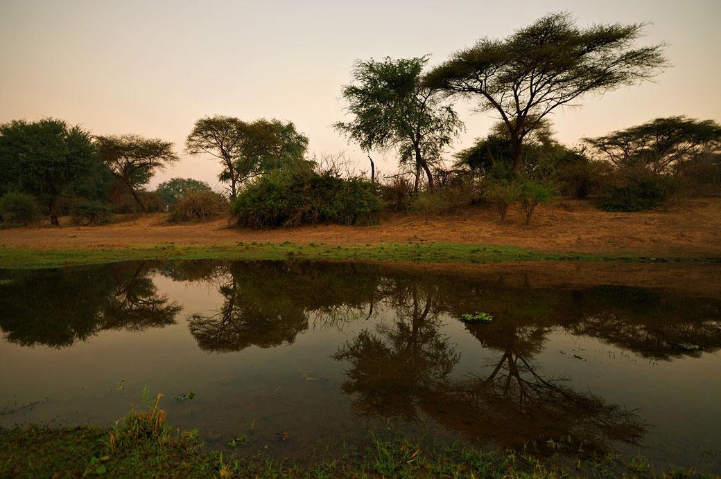 Reflet d'arbres dans une rivière, Zambie